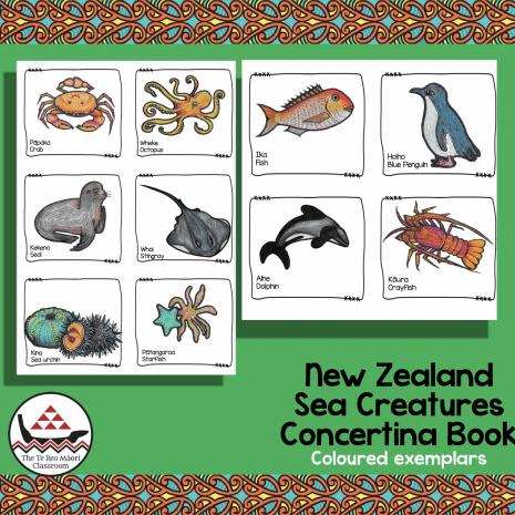 NZ Sea Creatures